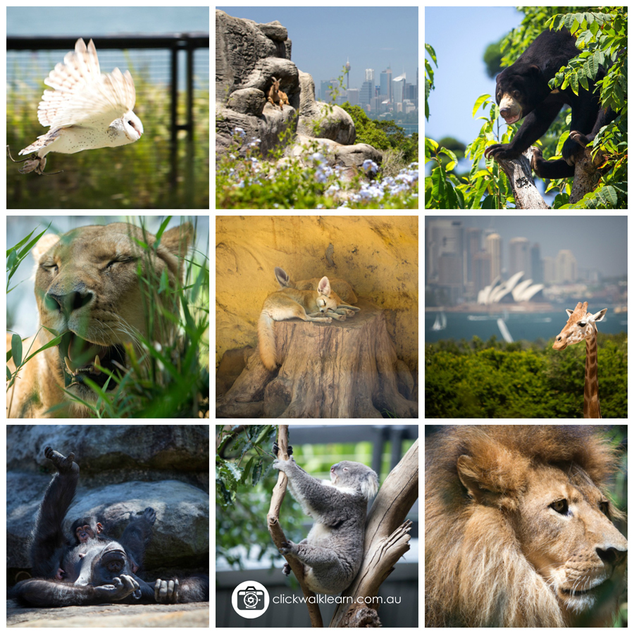 Learn ADVANCED photography techniques with click walk ...: http://clickwalklearn.com.au/2015/01/29/learn-advanced-photography-techniques-with-click-walk-learn-at-taronga-zoo/